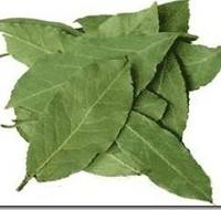 Лечение лавровым листом и отложение солей